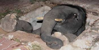 Elephant in a hole