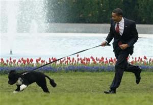 presidential_dog