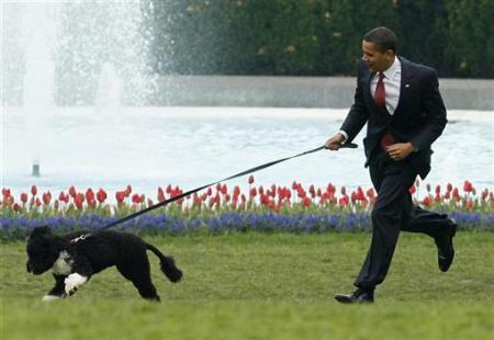 Bo, the Presidential Dog