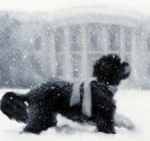 Bo at White House