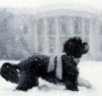Bo at White House