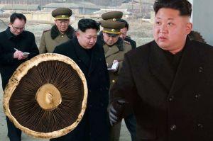 North-Korea mushrooms