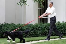 Obama with Bo